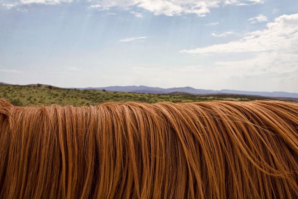 Od początku… czyli rola i budowa włosa.